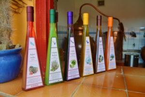 Bonaire-Cadushy-Distillery